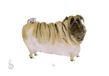 Fun Dog Art Print - Pug